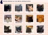 Gallery of cats.